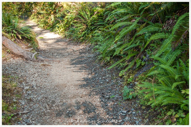 Quinault Forest Walk