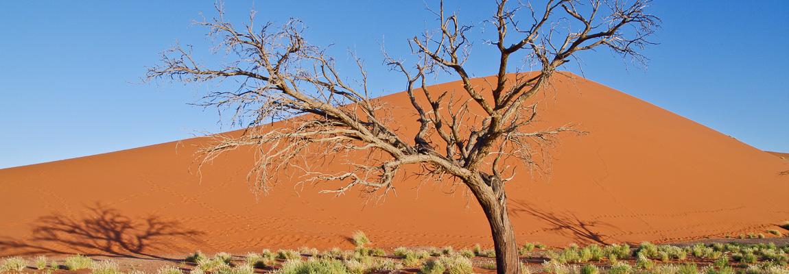 Trailheads zeigt Wüsten