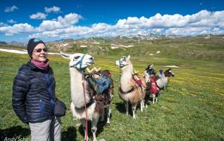 Mit Lama und Zelt in die Rockies